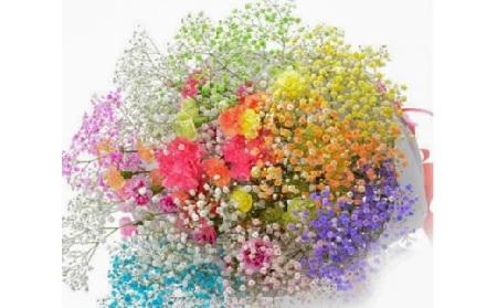 D1305 【毎月50セット限定】七色に輝く生花 ロマンチックかすみ草 <プレミアムスマイルブーケ>