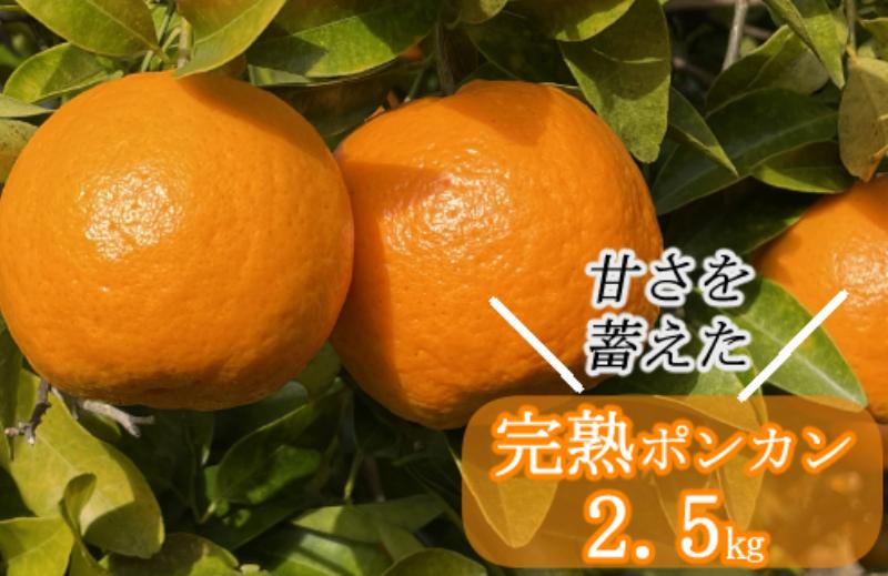 SA004越年完熟室戸ポンカン【2.5kg】