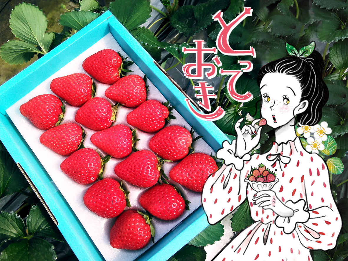 672 鳥取県新ブランド苺 「とっておき」 大粒詰め合わせ(苺工房  たけうち)