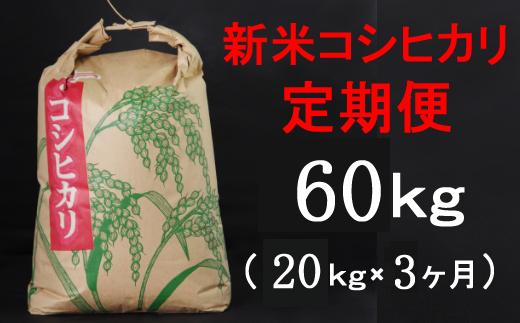TA034【令和3年産】室戸産新米コシヒカリ20kg【3回定期便】