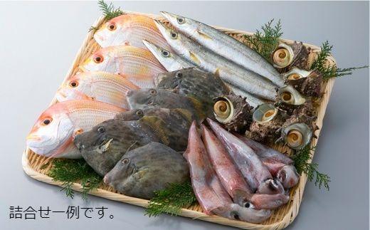 020M2 旬の鮮魚介類5種詰合せ[髙島屋選定品]