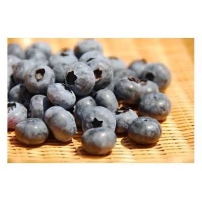 有機肥料で丹精込めて栽培した「ブルーベリー」1kg 栽培期間中農薬不使用 国産_PA0273