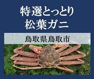 おすすめの鮮魚「特選とっとり松葉ガニ」