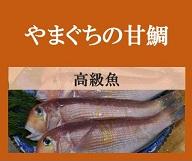 埋もれた魚「やまぐちの甘鯛」